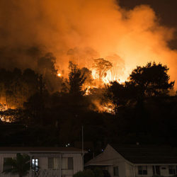 Solidarity with those affected by bush fires